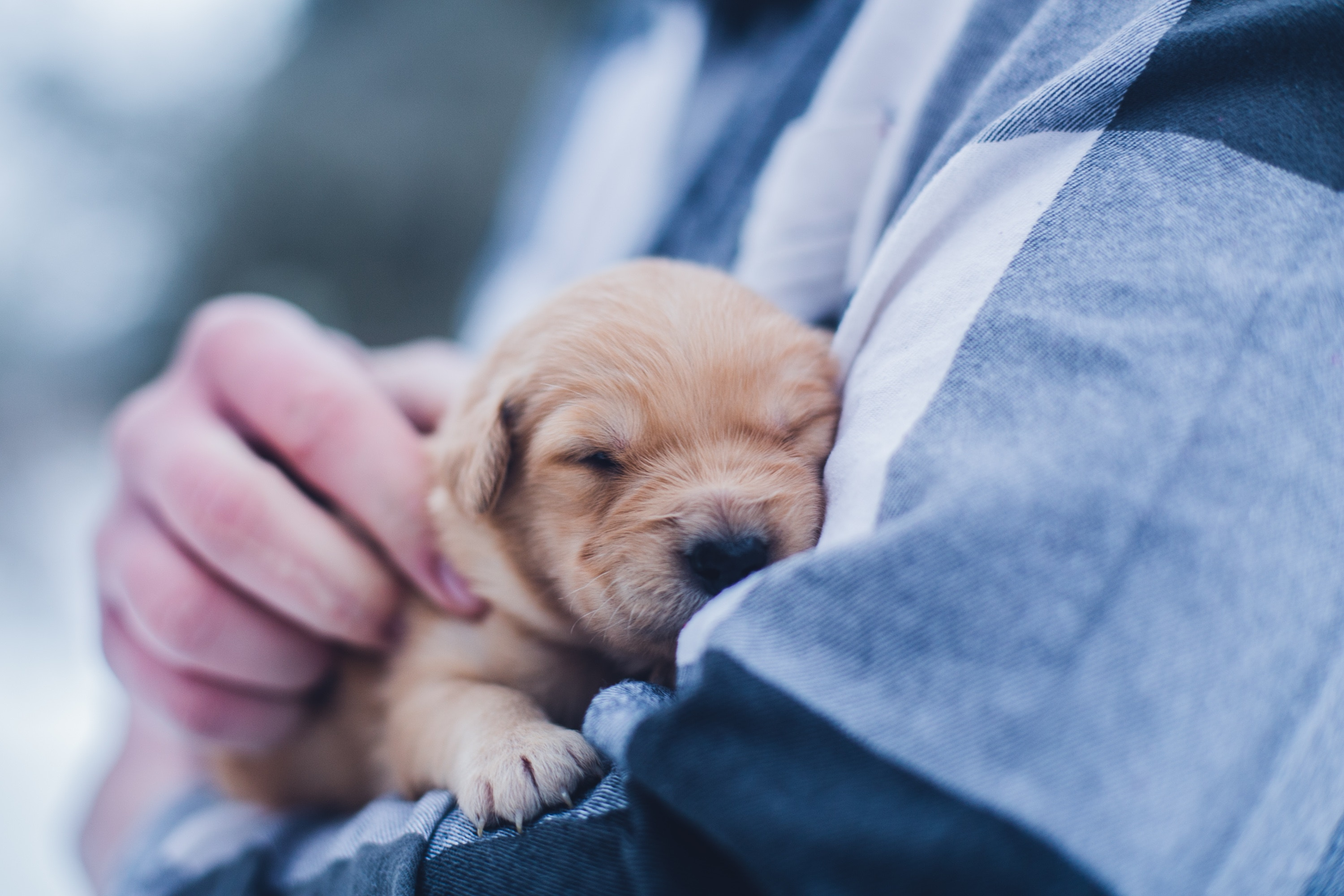 How Getting A Puppy Has Impacted My Mental Health