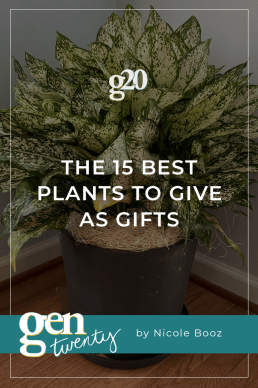The 15 Best Plants To Give as Gifts
