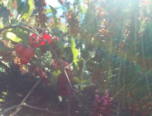 autumn berries and radiant fruits
