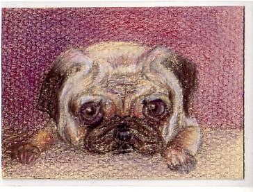 "2.5"" x 3.5"" colored pencil"