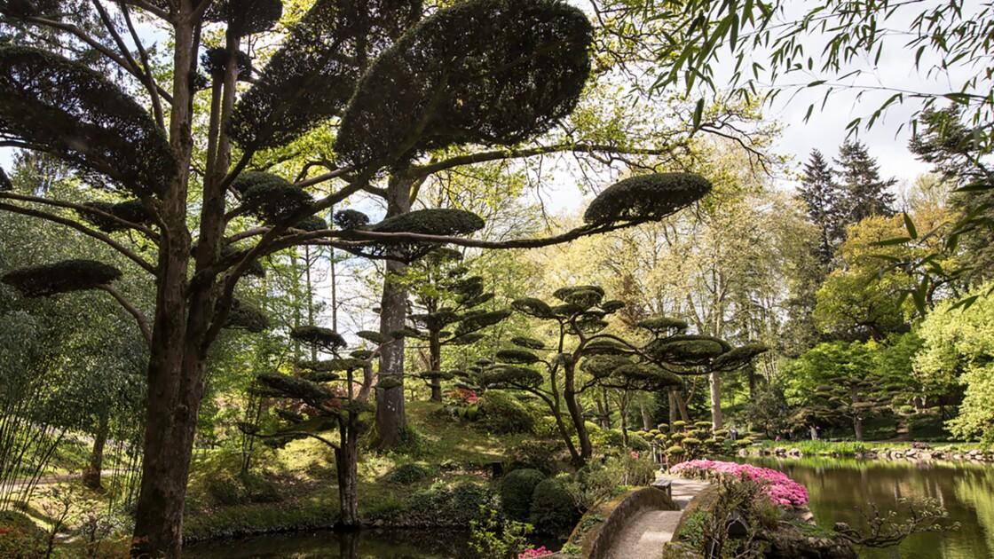 un immense jardin japonais a maulevrier