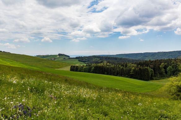 Feld und Wald