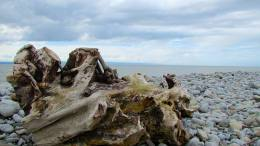 Driftwood on beach near cache GC2FH15 in South Wales this afternoon