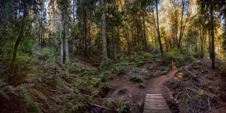 Muir-woods-21a