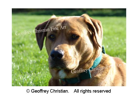 dog, animal, pet, pet photography, photography, geoffrey christian