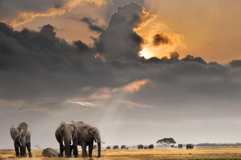 elephants on the plain