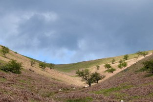 Broadhill Dale