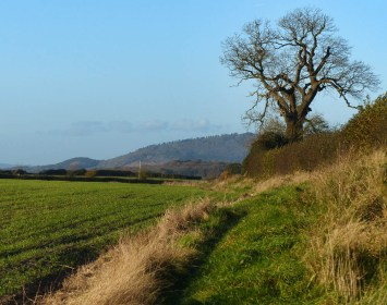View to the Wrekin