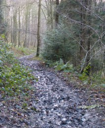 Mud in Mogg Forest