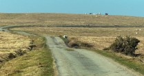 Wild horses on Cefn Pawl