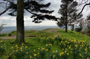 Daffodils and distant hills