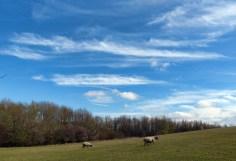 Sky stripes and sheep