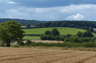 Distant pasture