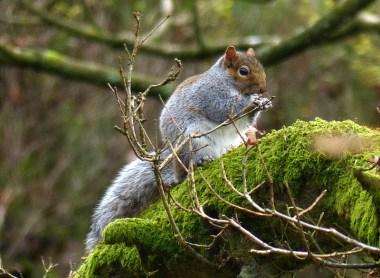Squirrel near Lud's Church