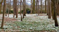 Snowdrop walk