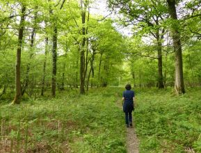 Bannister's Coppice