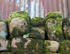 Mossy stone and corrugated iron