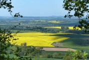 The yellow fields of Shropshire