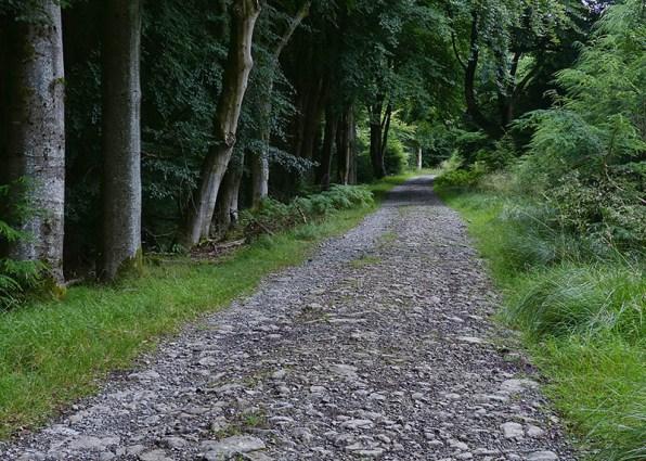 In Bucknell Wood