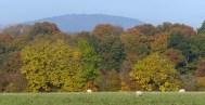 Leaves and Wrekin