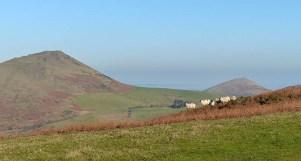 Caer Caradoc and sheep