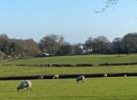 Sheepish fields