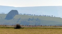 Distant trees and Radnor Forest