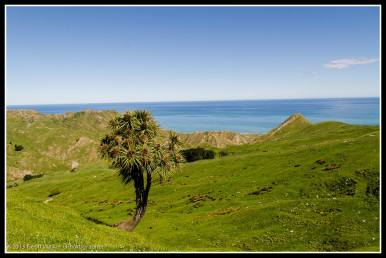 The iconic Cabbage Tree with a view...