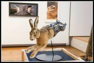Sean Crawford's hare......