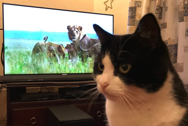 sammy watching dynasties