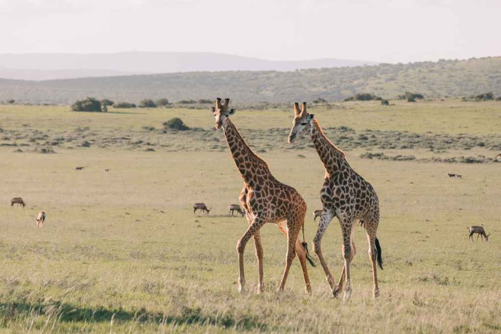 ways in which the wild animals are of significance to the economy of kenya