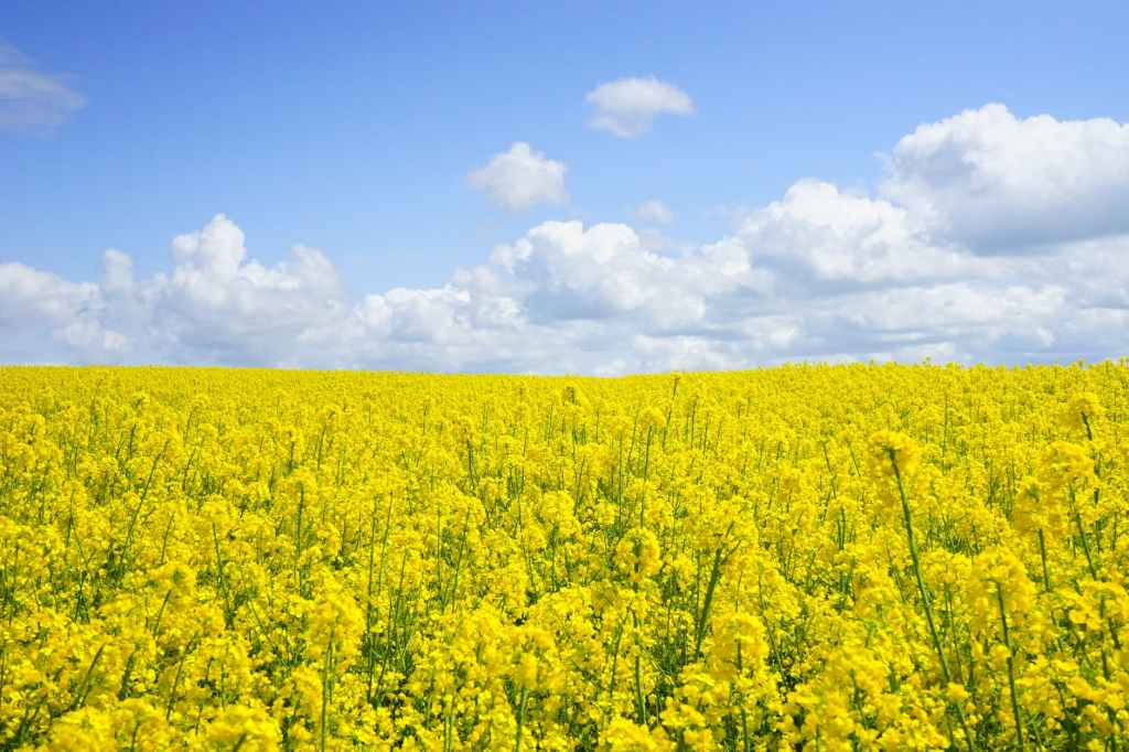 The following are advantages of irrigation farming in California
