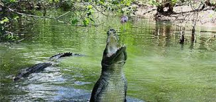 Image result for mombasa mamba village crocodile farm