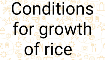 Conditions favoring rice farming