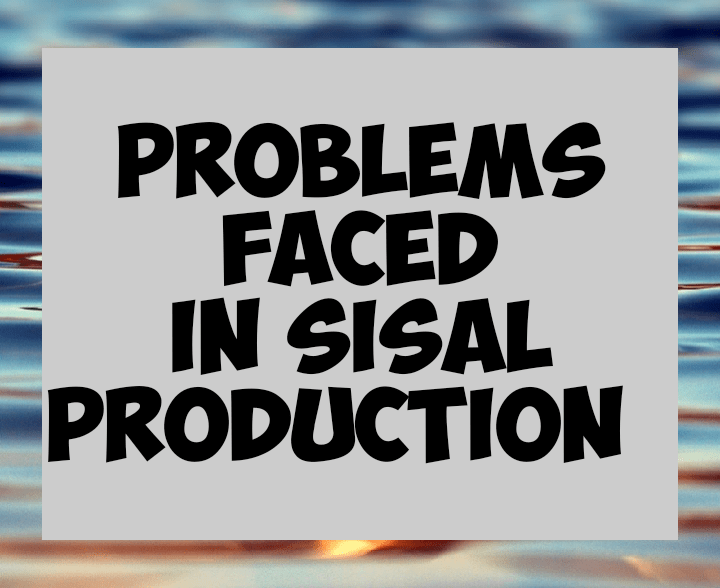 Problems facing sisal farming