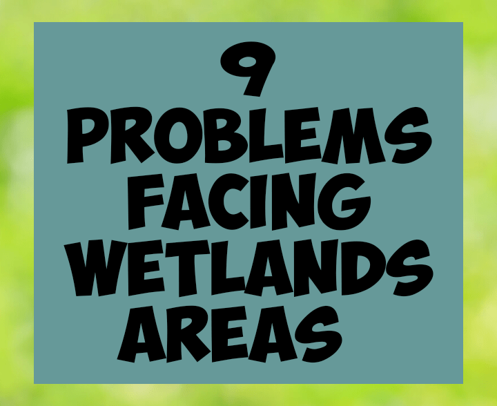9 problems facing wetland areas