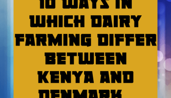 10 ways in which dairy farming differ between Kenya and denmark