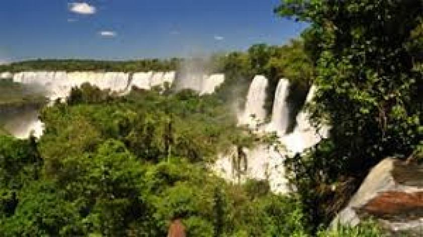 High rainfall and humidity lead to the formation of rainforest which comprises four layers namely crown of the tallest trees, canopy, understory, and shrub layer. The rainforest is made up of very dense vegetation