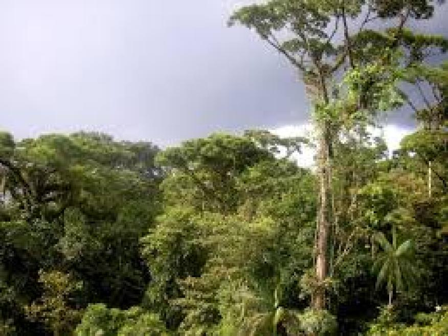 equatorial climate Abundant rainfall of 2000 mm on average