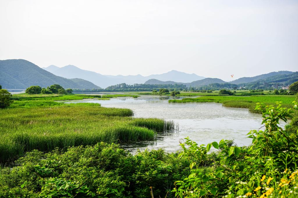 Wetland is the land area that is saturated with water, either permanently or seasonally, such that it takes on the characteristics of distinct ecosystem