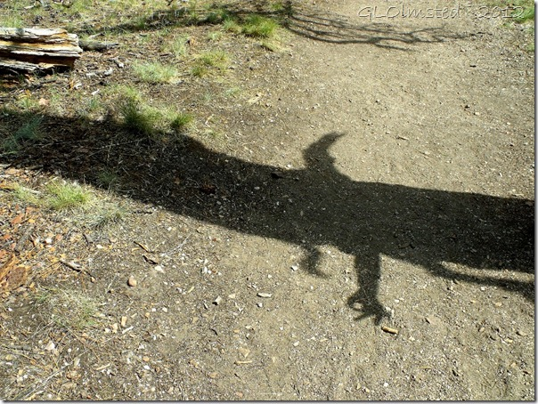 01a Tree shadow with Mike's hand along Transept trail NR GRCA NP AZ (1024x768)
