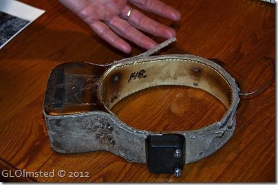 04 Radio collar for cougar (1024x678)