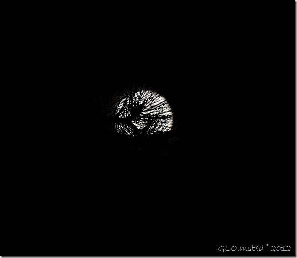 09e Perigee Supermoon through pines NR GRCA NP AZ 1-25s F11 (1024x888)