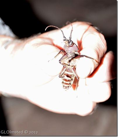 02ecr Mike holding Ponderous borer NR GRCA NP AZ (885x1024)