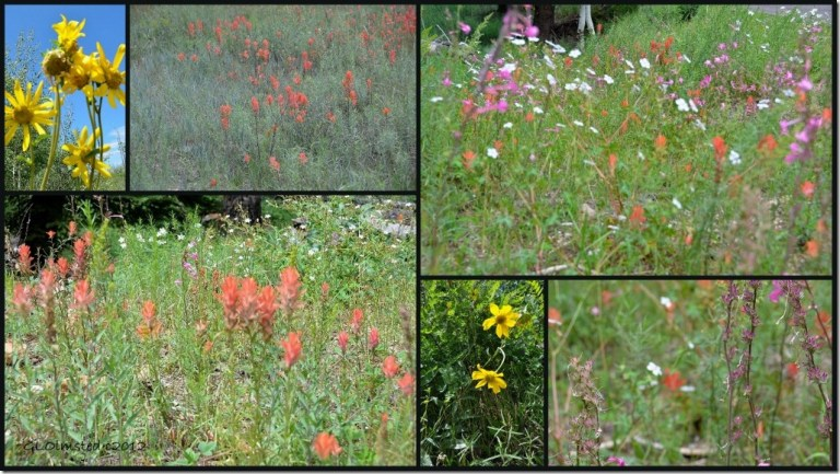 Wildflowers on the Walhalla collage (1024x576)