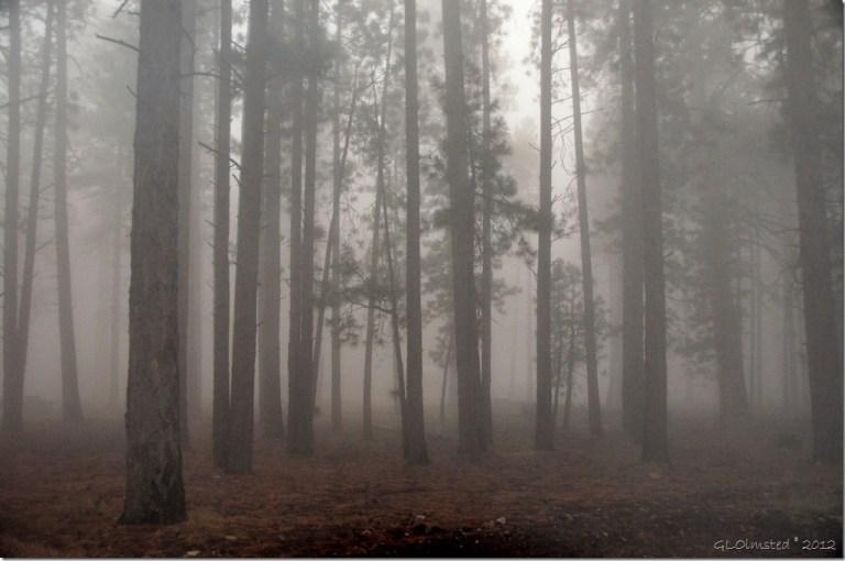 01 Foggy forest from RV window NR GRCA NP AZ (1024x678)