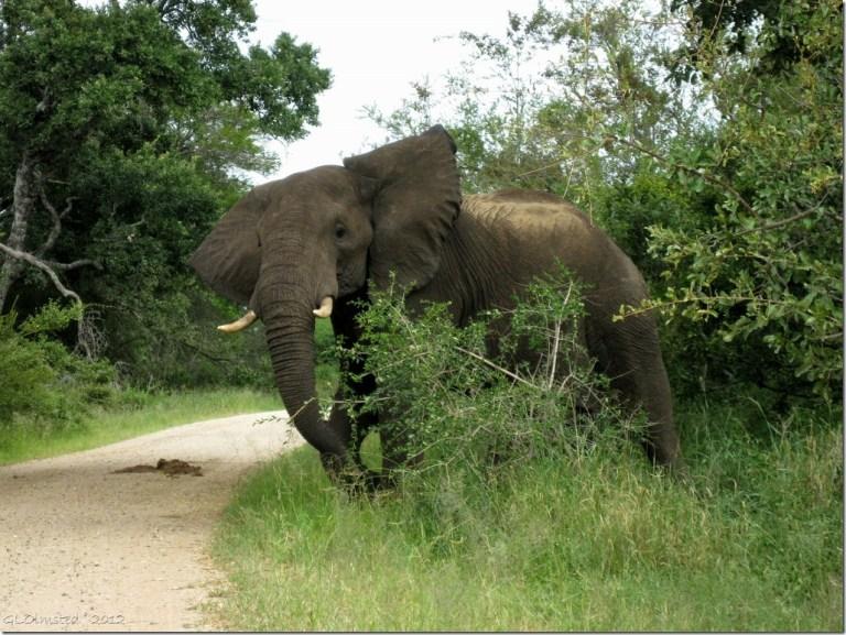 05 Elephant Kruger NP Mpumalanga ZA (1024x768)