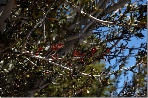 07 Red leaves on the mahogany NR GRCA NP AZ (1024x678)