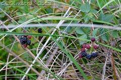 Wild raspberries Hogsback Arboretum SA