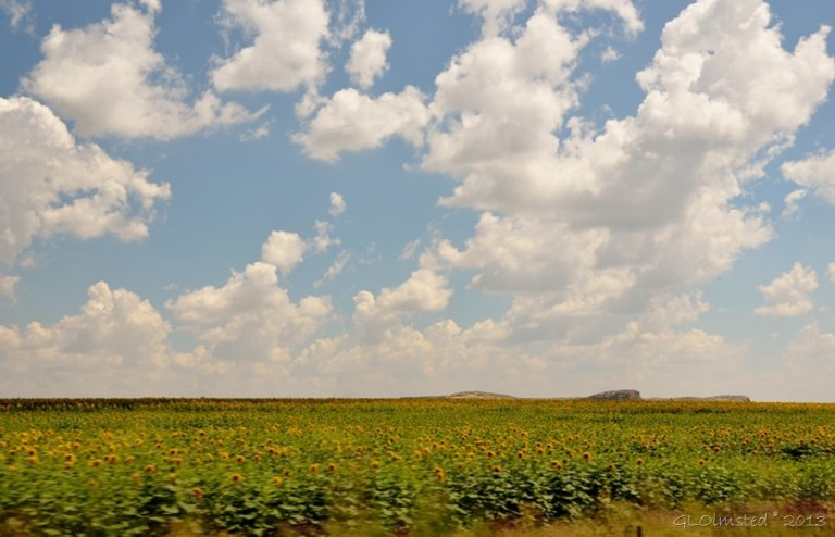 Fields of sunflowers R26 Free State SA